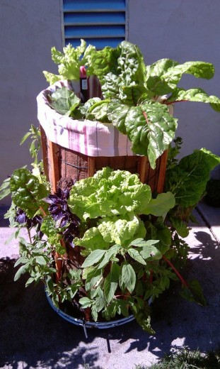 Phytopod-Vertical-Garden-Planter-with-herbs-vegetables