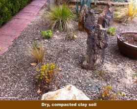 Compacted-clay-soil-in-garden-garden-center-tv