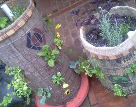 Newly-Planted-Phytopod-Vertical-Containers-with-vegetable-plants