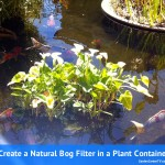 Natural-bog-filter-planter-with-gravel-and-plants-oxygen-tube-to-pump-gardencentertv
