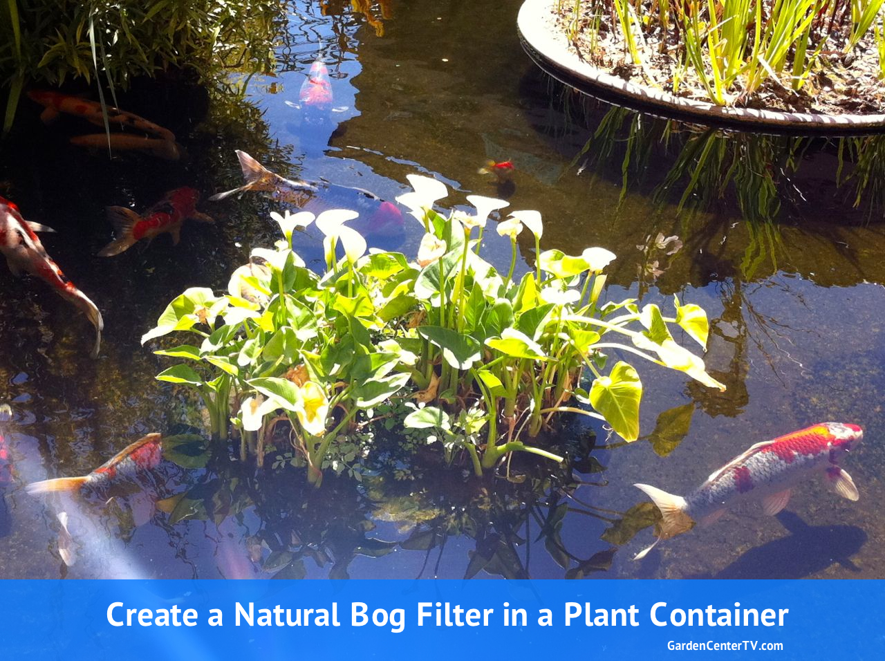 How to make a bog filter for small pond with garden pot for Water filtering plants for ponds