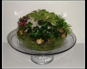 Cake-platter-terrarium-with-small-plants-garden-center-tv