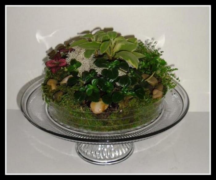 Cake-platter-terrarium-with-small-plants-garden-center-tv