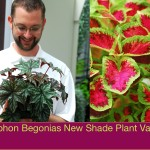 Gryphon-Begonias-New-Shade-Plant-Variety-plant for your garden