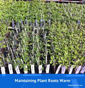 young-plants-rooting-in-tray-stay-warm-through-winter