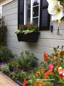 Black-window-box-garden-drought-tolerant-plants-garden-center-tv