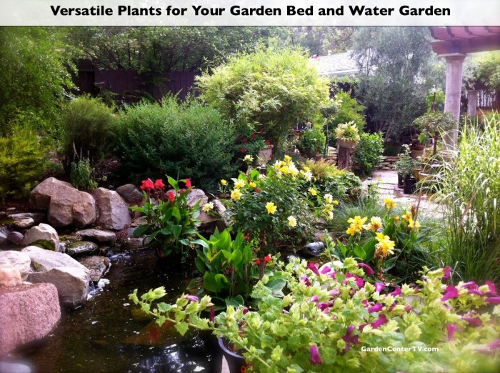 pond-plants-yellow-red-canna-lily-lotus-flower-gardencentertv