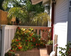 Nasturtium-flowers-on-porch-are-edible-flowers